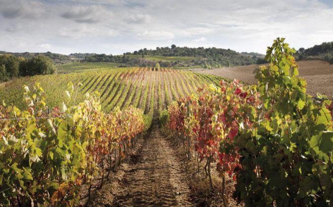 Vinos Vinos Las exportaciones de vino español aumentan un 3,5%